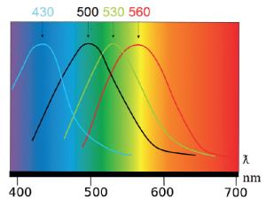 Abbildung Spektral-Photometrie