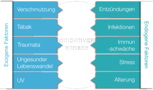Oxidativer Stress - Zell-Check